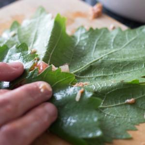 oprollen druivenblad